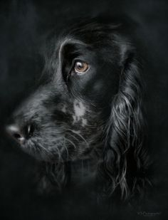 Black doggy with brown eyes