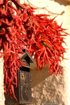 September is the month to visit Abruzzo and see doors ablaze with garlands of #peperoncini drying gently in the sun