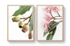 May & Ruby - Sharyn Coffee Flower Canvas, Flower Art, Australian Flowers, Australian Wildflowers, Patina Farm, Poster Prints, Art Prints, China Painting, Coffee Prints