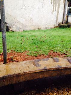 Gramado do parque D.Pedro forrado de aves!