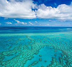 "@Regrann from @boatinternational -  Great Barrier Reef bleaching has reached a 'severe' level according to Australian scientists. ""Large sections of coral are drained of all colour and are fighting for survival"" @World_Wildlife spokesman Richard Leck said in a statement. Bleaching is caused by a rise in sea temperatures which leads to coral expelling living algae causing it to calcify. Visit link in bio for more info. #ocean #greatbarrierreef #oceanconservation #savethesea #boatinternational…"