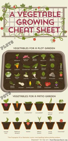 A vegetable growing cheat sheet: Pots and Plots Guide