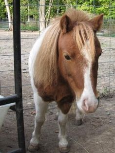 Looking to place Loving Minis - Lil Beginnings Miniature Horse and Pony - Free Sale Board