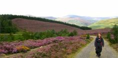 Walks in Wicklow – Wicklow County Tourism Local Attractions, I Want To Travel, Tourism, Hiking, Country Roads, Walks, Mountains, Ireland, Wanderlust