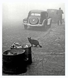 Sabine Weiss-photos-paris