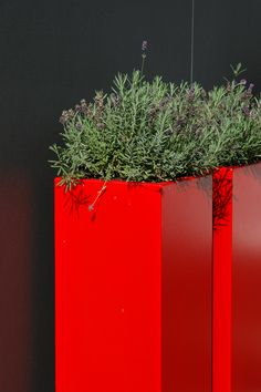 Aluminium Pflanzgefäß by ADEZZ planters & Red Plants, Potted Plants, Fiberglass Planters, Pot Jardin, Outdoor Pots, Flower Boxes, Front Yard Landscaping, Shades Of Red, Yard Art