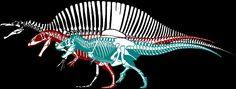 Tyrannosaurus, Giganatosaurus, Spinosaurus