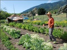 #OREGON #SWD #GREEN2STAY ASHLAND, Ore. (AP) - Unable to find a good solution to protecting their certified organic seed crops from potential contamination from genetically engineered crops, small organic farmers in this Oregon valley are appealing to a higher power: voters.