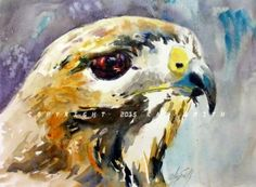 Hunter Hawk, painting by artist Kay Smith