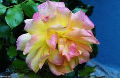 Flower 45 by Mohammad Azam