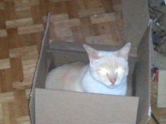 Piper sitting in a box