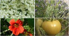 12 recetas caseras y económicas para eliminar plagas y enfermedades de un plumazo