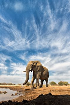 Whispy Elephant | Unseasonable wispy winter clouds at Botswana Safari | by Keith Connelly