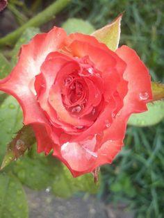 Rosa labios de mujer 06-05-15