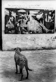 DOG + GUERNICA sold, Fogato Stefano