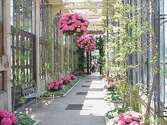 white and pink hydrangea garden - Google zoeken
