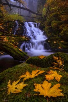 "Beautiful late Autumn waterfall - Columbia River Gorge, OR ... ""Some people feel the rain. Others just get wet."" ~ Bob Marley  