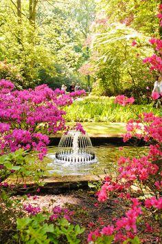 Keukenhof Garden, The Netherlands (by kruijffjes).