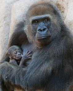 https://flic.kr/p/mKXsuQ | Motherhood | Imani and her baby girl