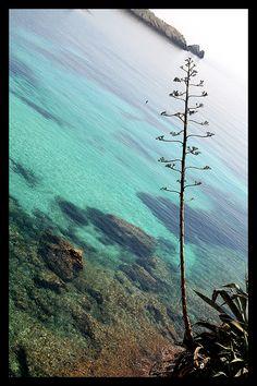 #summer #sun #beach #ocean