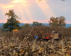 "1st Place Winner!! ""Working til Sunset"" Photo Credit: Denise Guthery New Wilmington, PA"