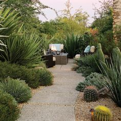 Southwest Backyard Ideas - Sunset.  Agave schotti is one of the drought tolerant agave stars along this path. https://shop.cacti.com/landscape-succulents/agave-schottii/ #Agaves_SerraGardens #agave_schottii #succulents_droughttolerant