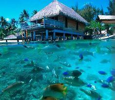 Bora Bora. I want to go here, especially on a day like today.