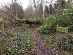 This tree has fallen right across Richard's Path inside the St Pancras and Islington cemetery.
