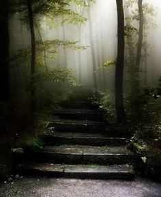 Doesn't this just look like you're entering some sort of other world? Someone made these steps lets count them as we enter your imagination!!!