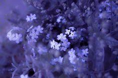 Epic of blue flower by Lafugue Logos, via 500px