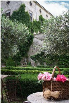 Olive trees, hedges, vines