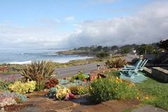 Cambria Shores Inn - Great place to stay in Cambria, CA and extremely dog friendly! The perfect getaway!!