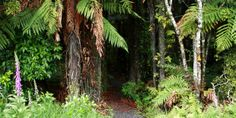 The Puhinui Stream Forest Trail is a tranquil escape from urban Auckland, just 25 minutes from the city and five minutes from central Manukau.