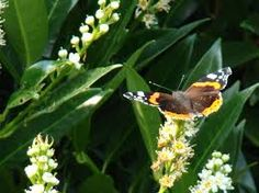 imagens de borboletas voando - Pesquisa Google