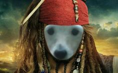 The dog pirate