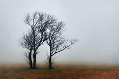 mist-me-froot7