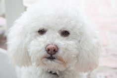 Like humans, dogs produce tears for a variety of reasons besides just lubricating the eye.