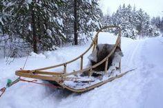 diy dog sled - Google Search