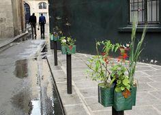 Easy urban guerrilla gardening idea