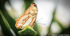 Im Juni machen wir uns Gedanken zu unsere Bestimmung. Tierfotografie mit Makro in der Natur, Schmetterling, bunt, Garten, Fantasie, Freizeit, Fotografie, Coaching, Coachingkalender