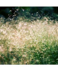 Green Green Grass of Summer......By Daria Rutencka