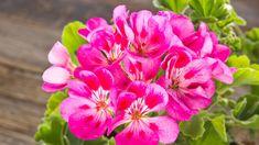 21 tipů a rad, jak to udělat Flowers, Plants, Garden, Rose