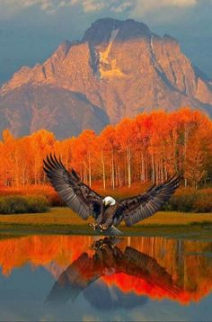 Eagle - Beautiful reflection on the water w/the scenery. Eagle - Beautiful reflection on the water w/the scenery.
