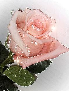 A rose to say-Buddhism Roses Gif, Flowers Gif, Butterfly Flowers, Pink Flowers, Beautiful Rose Flowers, Beautiful Gif, Beautiful Flowers, Pink Flower Photos, White And Pink Roses