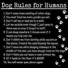 Our dog posted these rules on the fridge today.  lol