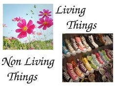"PowerPoint for  1st grade classroom for  science unit about ""Living and Non Living Things"""