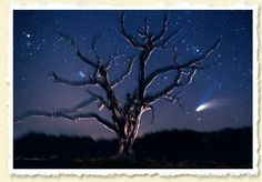Comet Hale Bopp  John Moran Florida Nature Photography