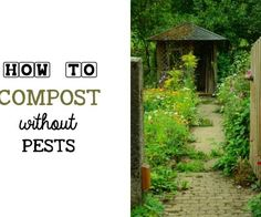 Need a rat-proof compost bin or a way to keep rodents including mice out? This tumbler compost bin keeps your food scraps away from pests and makes good compost for the garden. Compost Soil, Composting, Container Gardening, Gardening Tips, Clematis Care, Ponds For Small Gardens, Low Maintenance Backyard, Greenhouse Shed, Diy Garden Projects