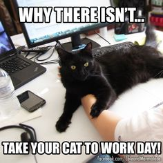 #cats #work #office http://coleandmarmalade.com