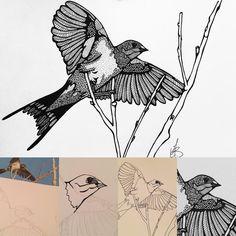 Hoe mijn tekeningen op papier komen? Schetsen, potlood vervangen door zwarte lijnen, lijnen uitwerken, patronen toevoegen. Alles met de hand. #maureenvertelt #zwaluw #swallow #boerenzwaluw